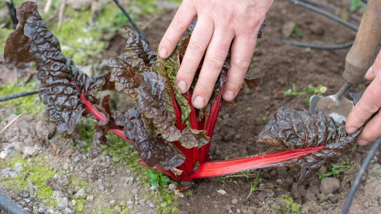 the-wright-root-market-gardener-perthshire